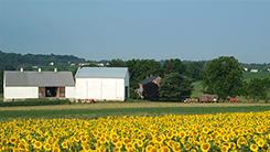 Farmhouse Landscape Photo